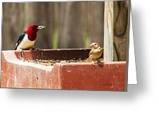 Red-headed Woodpecker Feeding Greeting Card