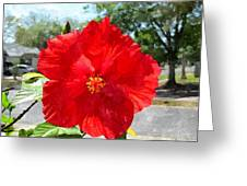 Red Hibiscus In The Neighborhood Greeting Card