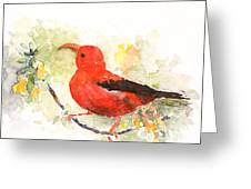 I'iwi - Hawaiian Red Honeycreeper Greeting Card