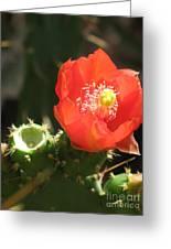 Hot Red Cactus Greeting Card