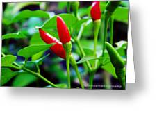 Red Hot.. Chillis Greeting Card