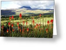 Red Hot Pokers Of The Andes Greeting Card