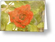 Red Hot Rose Greeting Card