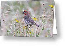 Red House Finch In Flowers Greeting Card