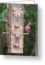 Red House Finch Greeting Card