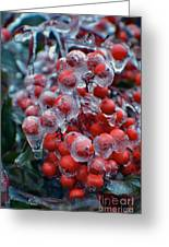 Red Ice Berries Greeting Card
