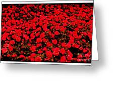 Red Impatiens Flowers Greeting Card