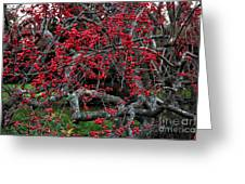 Red In Fall Greeting Card