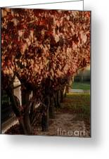 Red In Row Greeting Card