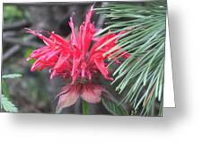 Red In Summer Greeting Card