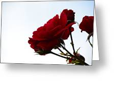 Red In The Sky Greeting Card