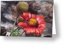Red Indian Blanket Greeting Card