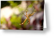 Red Invisible / Invisible Web  Greeting Card
