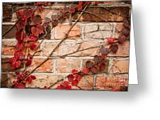 Red Ivy Leaves Creeper Greeting Card