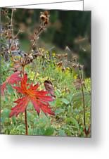 Red Leaf Greeting Card