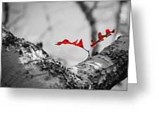 Red Leaf Greeting Card