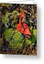 Red Leaf On Moss Greeting Card