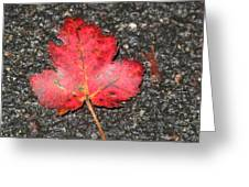 Red Leaf On Pavement Greeting Card