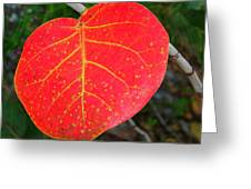 Red Leaf With Yellow Veins Greeting Card