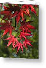 Red Leafs Of The Maple Greeting Card