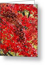 Red Leaves 3 Greeting Card
