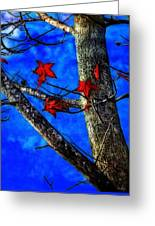 Red Leaves Blue Sky In Autumn Greeting Card