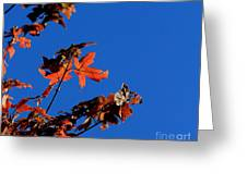 Red Leaves Blue Sky Greeting Card