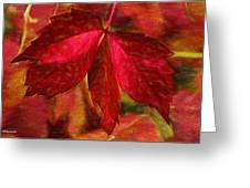 Red Leaves - Cave Dwelle Greeting Card