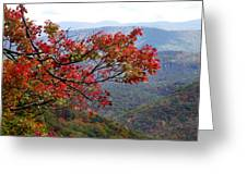 Red Leaves In The Blueridge Greeting Card