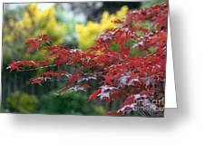 Red  And  Yellow  Leaves  Greeting Card