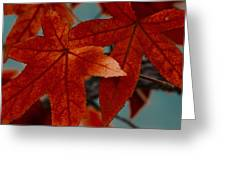 Red Leaves On The Branches In The Autumn Forest. Greeting Card