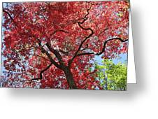 Red Leaves On Tree Greeting Card