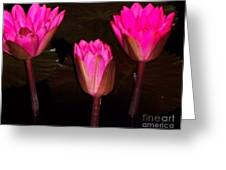 Red Lilies At Night Greeting Card