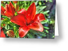 Red Lily 2 Greeting Card
