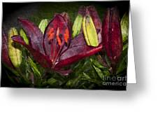 Red Lily 5 Greeting Card