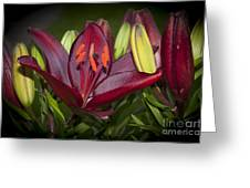 Red Lily 6 Greeting Card