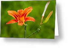 Red Lily - Featured 3 Greeting Card