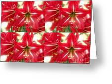 Red Lily Four Greeting Card