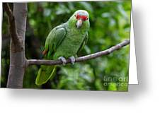 Red-lored Parrot On Branch Greeting Card