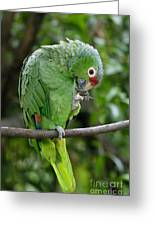 Red-lored Parrot Greeting Card