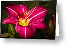 Red Magic Daylily Greeting Card