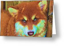 Red Malamute Greeting Card