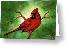Red Male Cardinal Greeting Card