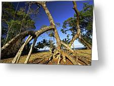 Red Mangrove Aerial Roots Greeting Card