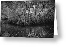Red Mangroves Number 1 Greeting Card
