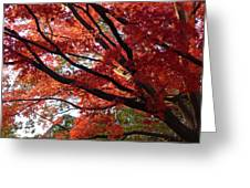 Red Maple 01 Greeting Card