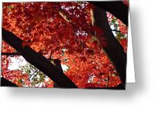 Red Maple 02 Greeting Card