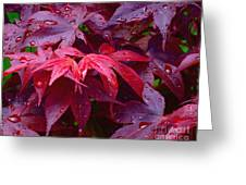 Red Maple After Rain Greeting Card