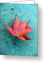 Red Maple Blue Greeting Card