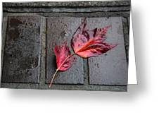 Red Maple Bricks Greeting Card